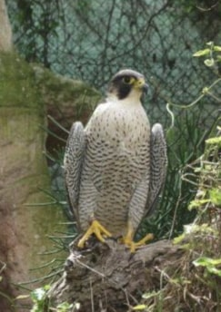 Falconry Malta guided tour by Amy Pace